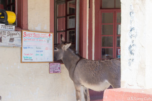 burron at ice cream shop window